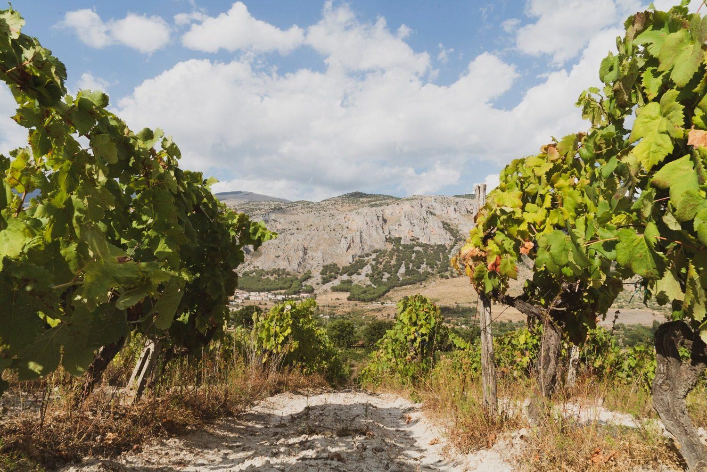 calabria, vino calabrese, vino rosso, vino bianco, wine, made in italy, vino italiano