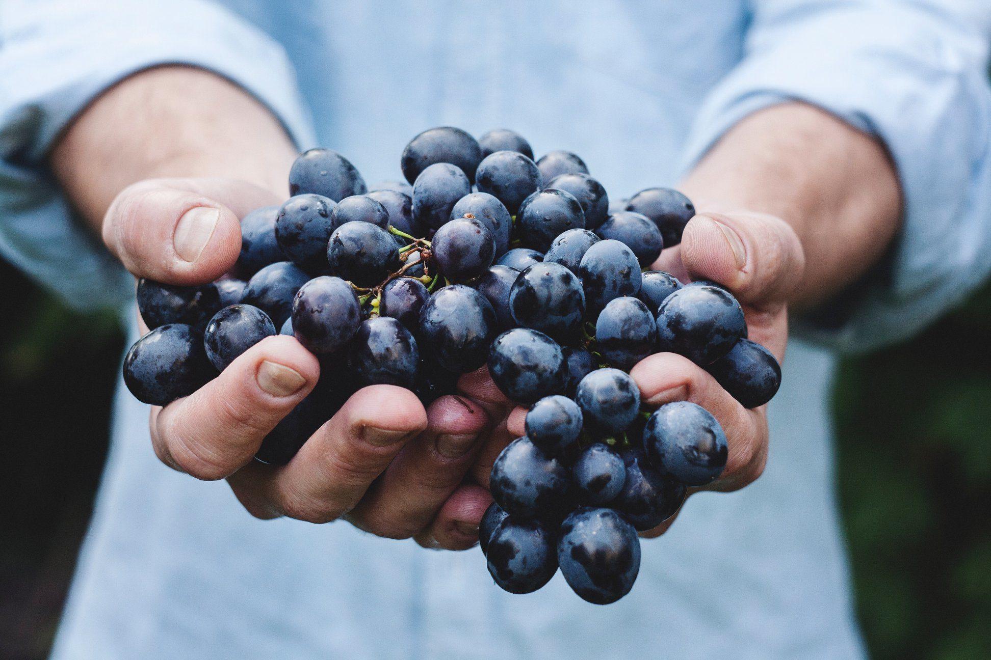 marche, ancona, vino, produttori vino, vino rosso, vino bianco, miele, lavanda, enogastronomia